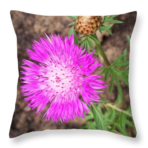 Flower Throw Pillow featuring the photograph Corn Flower by Corinne Elizabeth Cowherd