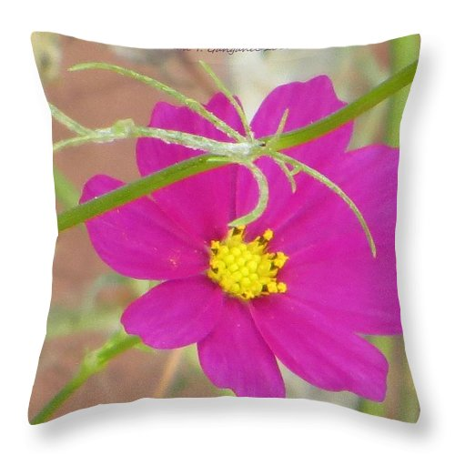 Beautiful Flower Called Cosmos Throw Pillow featuring the photograph Cosmic Florets by Sonali Gangane