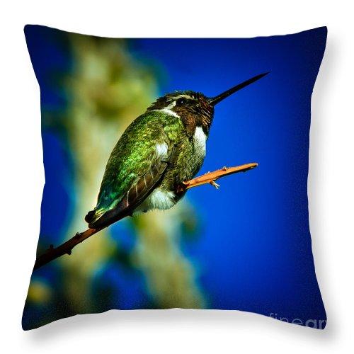 Birds Throw Pillow featuring the photograph Costa's Hummingbird by Robert Bales