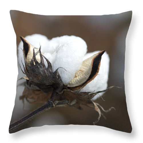 Cotton Throw Pillow featuring the photograph Cotton - Southern Gold by Kathy Clark