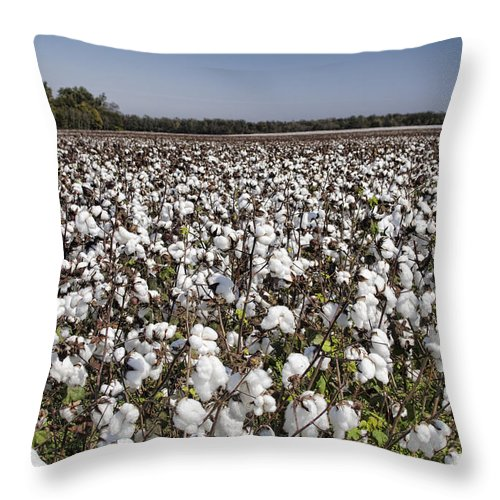 Cotton Throw Pillow featuring the photograph Cotton In Limestone County by Kathy Clark