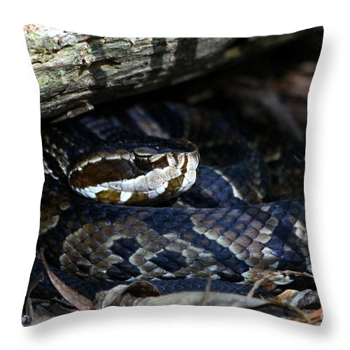 Cottonmouth Snake Throw Pillow featuring the photograph Cotton Mouth Hiding In Gum Swamp by Barbara Bowen