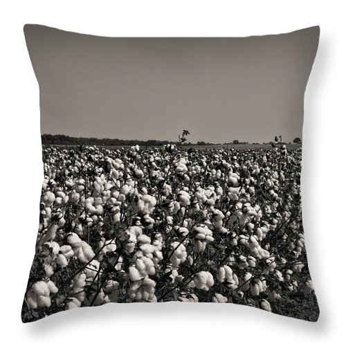 Cotton Throw Pillow featuring the photograph Cotton The Heart Of Dixie by Kathy Clark