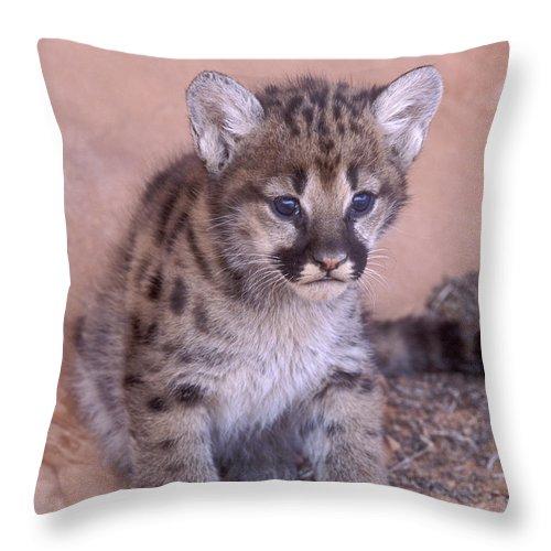 Bronstein Throw Pillow featuring the photograph Cougar Kitten by Sandra Bronstein