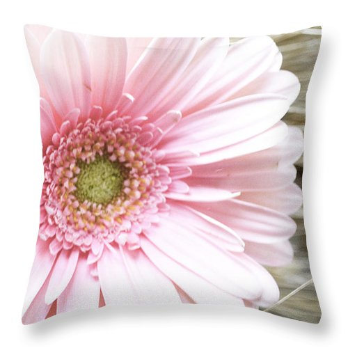 Gerber Daisy Throw Pillow featuring the photograph Country Pink by Traci Cottingham