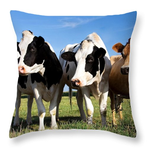 Agriculture Throw Pillow featuring the photograph Cows by Jane Rix