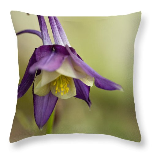 Aquilegia Throw Pillow featuring the photograph Coy Columbine by Kathy Clark