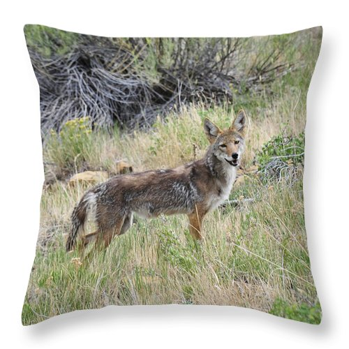 Coyote Throw Pillow featuring the photograph Coyote by David Arment