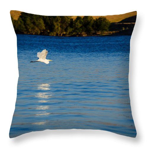 Wildlife Photography Throw Pillow featuring the photograph Crane In Flight by La Rae Roberts