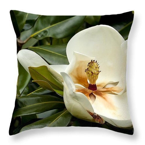 Flower Throw Pillow featuring the photograph Creamy Magnolia by Teresa Zieba