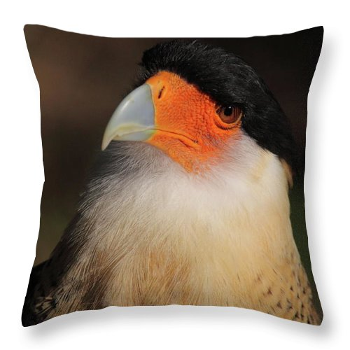 Caracara Throw Pillow featuring the photograph Crested Caracara by Bruce J Robinson