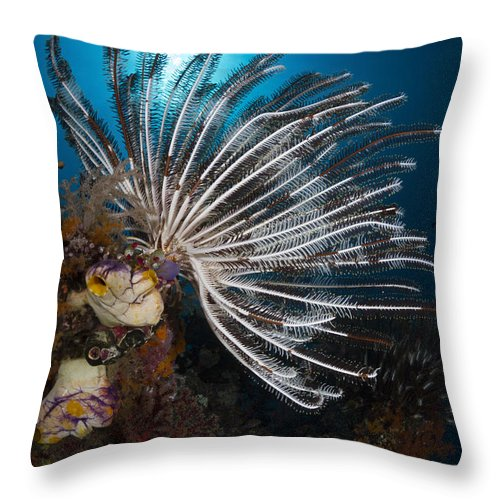 Crinoid Throw Pillow featuring the photograph Crinoid In Raja Ampat, Indonesia by Todd Winner