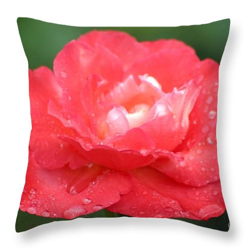 Roses Throw Pillow featuring the photograph Crisp Coral by Living Color Photography Lorraine Lynch