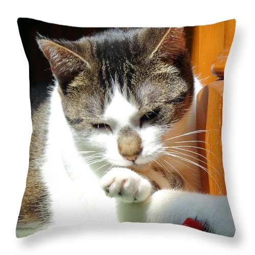 Kitty Throw Pillow featuring the photograph Critical Thought by Lisa Brandel