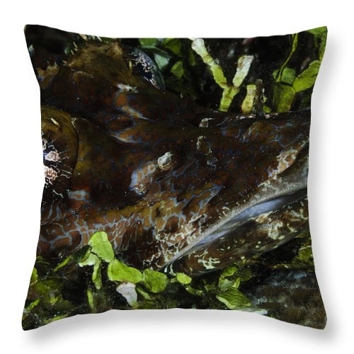 Crocodilefish Throw Pillow featuring the photograph Crocodile Fish, Indonesia by Todd Winner