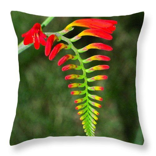 Nature Throw Pillow featuring the photograph Crocosmia - Lucifer Plant by Sean Griffin