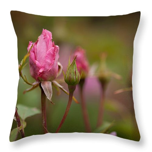 Rose Throw Pillow featuring the photograph Crown Of Creation by Mike Reid