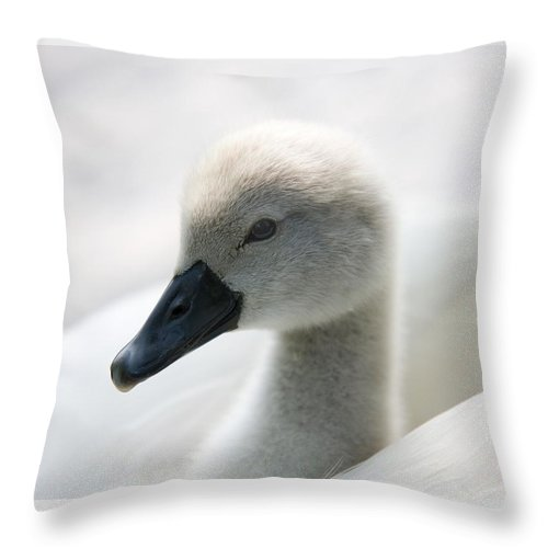 Feathers Throw Pillow featuring the photograph Cygnet by Mark Heywood