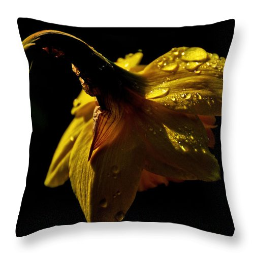 Yellow Throw Pillow featuring the photograph Daffy Drops by Mary Anne Williams