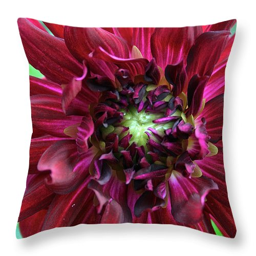 Landscape Throw Pillow featuring the photograph Dahlia 2005 by Susan Herber
