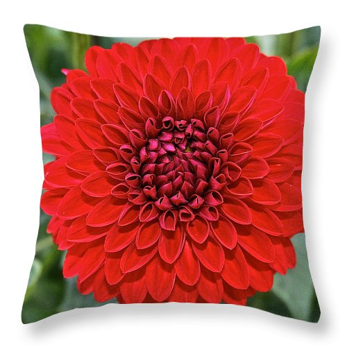 Landscape Throw Pillow featuring the photograph Dahlia 4001 by Susan Herber
