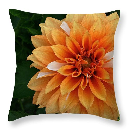 Landscape Throw Pillow featuring the photograph Dahlia 7001 by Susan Herber