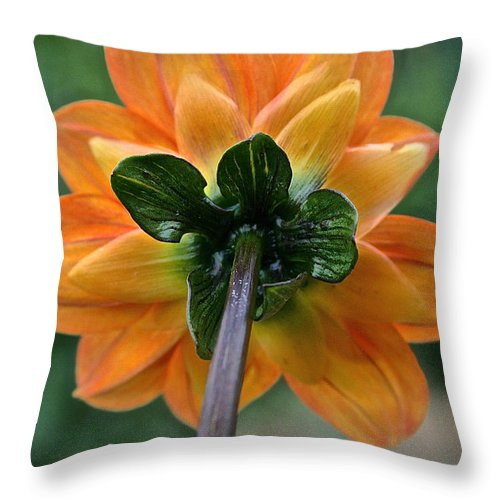 Landscape Throw Pillow featuring the photograph Dahlia 9001 Rearview by Susan Herber