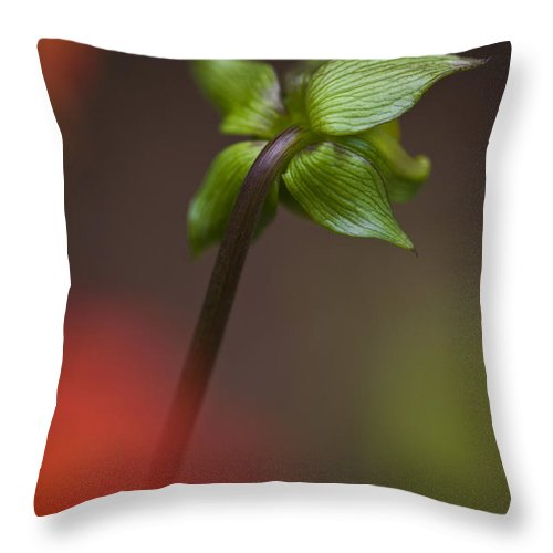 Nature Throw Pillow featuring the photograph Dahlia Bud by Heiko Koehrer-Wagner