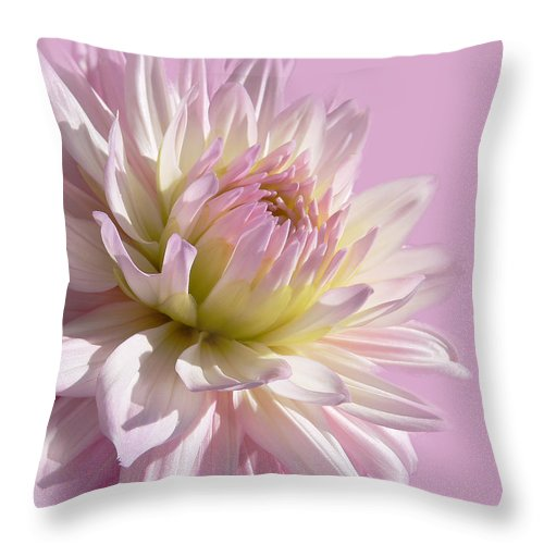 Dahlia Throw Pillow featuring the photograph Dahlia Flower Pretty In Pink by Jennie Marie Schell