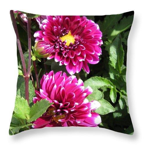 Dahlia Throw Pillow featuring the photograph Dahlia Named Edinburgh by J McCombie