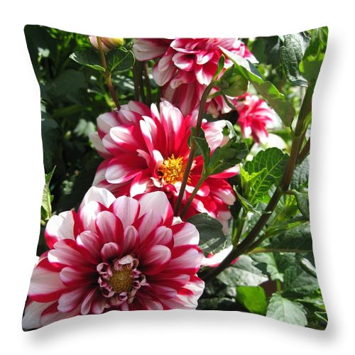 Dahlia Throw Pillow featuring the photograph Dahlia Named Yoro Kobi by J McCombie