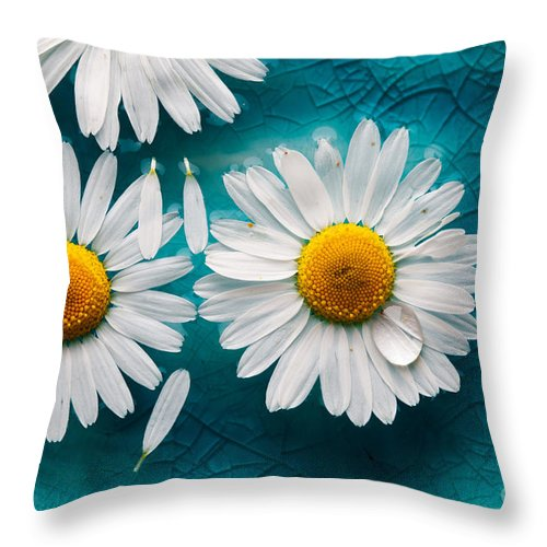 Aroma Throw Pillow featuring the photograph Daisies Floating In Water by Kati Finell