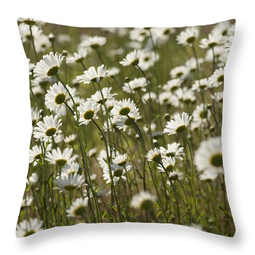 Leucanthemum Vulgare Throw Pillow featuring the photograph Daisy Fields Forever - Alabama Wildflowers by Kathy Clark
