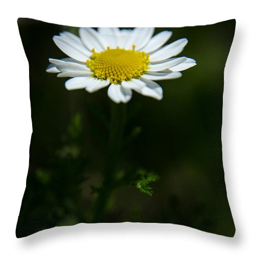 Background Throw Pillow featuring the photograph Daisy In Full Growth by Michael Goyberg