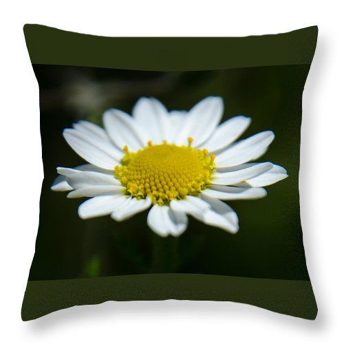 Background Throw Pillow featuring the photograph Daisy On Green by Michael Goyberg