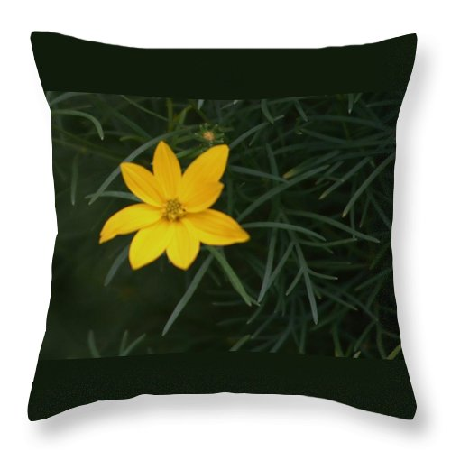 Photo Throw Pillow featuring the photograph Daisy Wannabee by Barbara S Nickerson