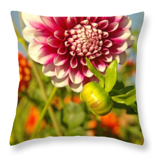 Flowers Throw Pillow featuring the photograph Dalhia In Bloom by Jeff Swan