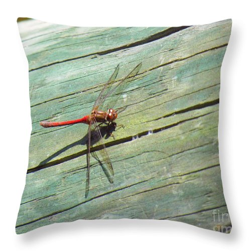 Damselfly Throw Pillow featuring the photograph Damselfly ready for liftoff by Rrrose Pix