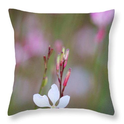 Whirling Butterflies Throw Pillow featuring the photograph Dancing Whirling Butterflies by Brooke Roby