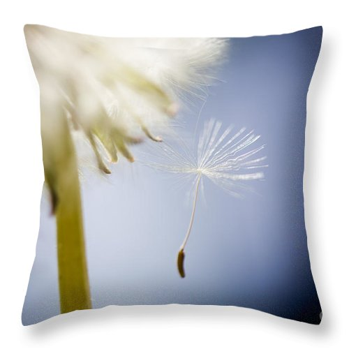 Abstract Throw Pillow featuring the photograph Dandelion by Kati Finell