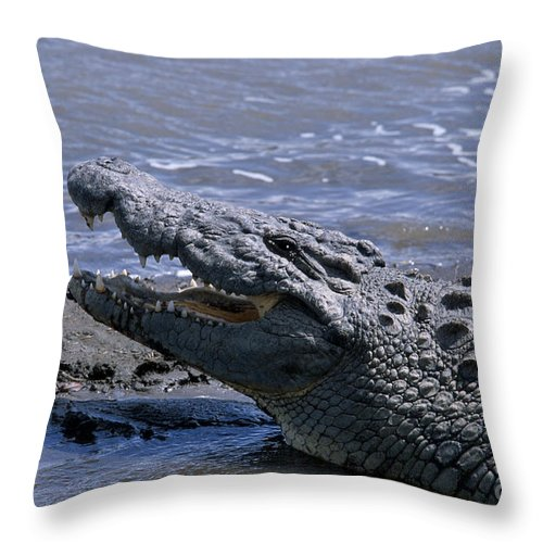 Crocodile Throw Pillow featuring the photograph Danger On The Mara River by Sandra Bronstein