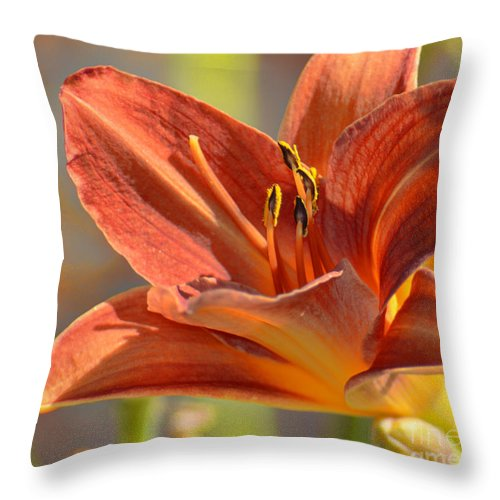 Fine Art Throw Pillow featuring the photograph Day Lily by Donna Greene