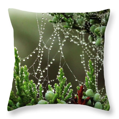 Web Throw Pillow featuring the photograph Decorated Bush Quogue Wildlife Preserve by Rick Berk