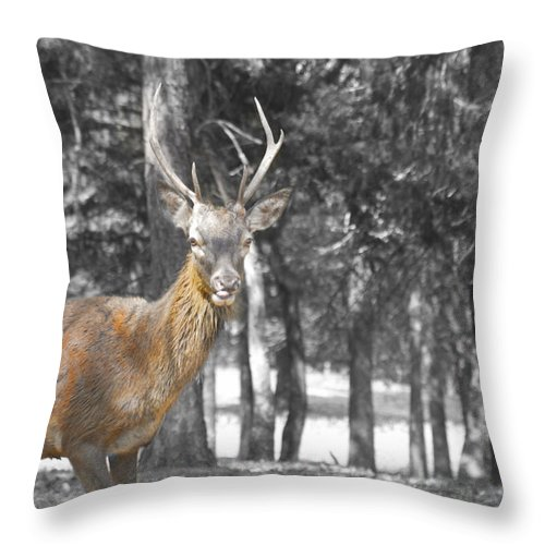 Deer Throw Pillow featuring the photograph Deer In The Forest by Douglas Barnard