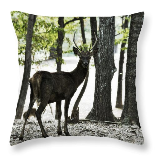 Red Deer Throw Pillow featuring the photograph Deer In The Woods by Douglas Barnard