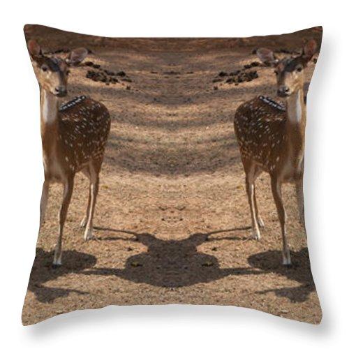 Deer Throw Pillow featuring the photograph Deer Symmetry by Douglas Barnard