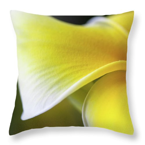 Yellow Throw Pillow featuring the photograph Delicate Yellow by Pam Fong