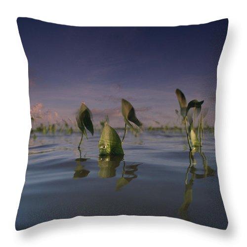 Color Image Throw Pillow featuring the photograph Delta Duck Potato Plants, Sagittaria by James P. Blair