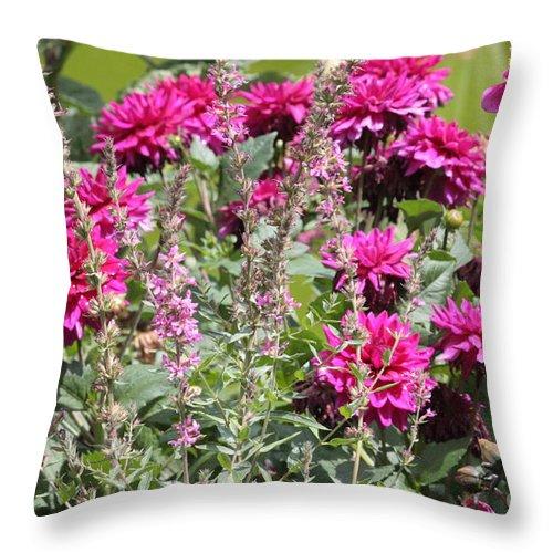 Pink Dahlias Throw Pillow featuring the photograph Demure Dahlias by Carol Groenen