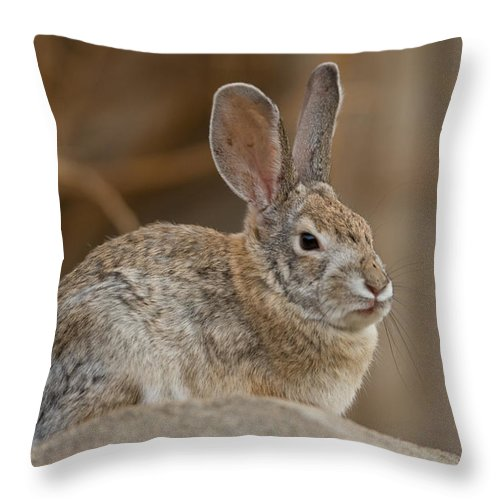 Photography Throw Pillow featuring the photograph Desert Cottontail Rabbits by Joel Sartore